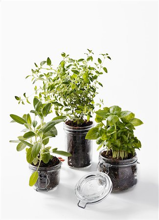 Herbs Growing in Jars Stock Photo - Premium Royalty-Free, Code: 600-05560180