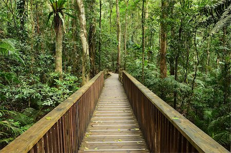 queensland - Boardwalk through Rainforest, Daintree National Park, Queensland, Australia Stock Photo - Premium Royalty-Free, Code: 600-05609639