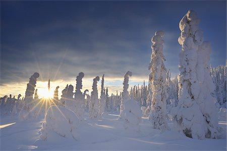 Valtavaara, Kuusamo, Northern Ostrobothnia, Oulu Province, Finland Stock Photo - Premium Royalty-Free, Code: 600-05609966