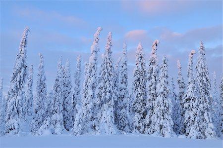 Kuusamo, Northern Ostrobothnia, Oulu Province, Finland Stock Photo - Premium Royalty-Free, Code: 600-05609974