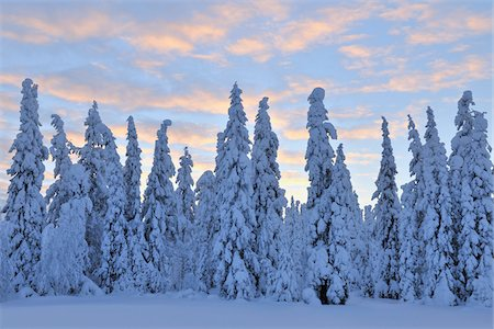 snow covered trees - Kuusamo, Northern Ostrobothnia, Oulu Province, Finland Stock Photo - Premium Royalty-Free, Code: 600-05609972