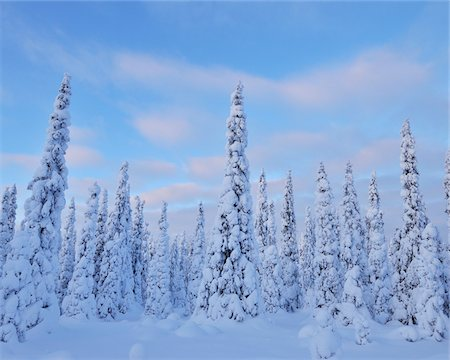 Kuusamo, Northern Ostrobothnia, Oulu Province, Finland Stock Photo - Premium Royalty-Free, Code: 600-05609973