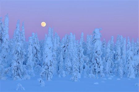 Kuusamo, Northern Ostrobothnia, Oulu Province, Finland Stock Photo - Premium Royalty-Free, Code: 600-05609985