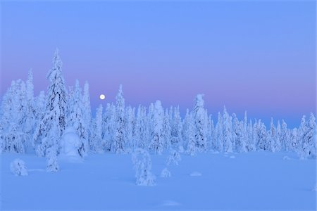 snow covered trees - Kuusamo, Northern Ostrobothnia, Oulu Province, Finland Stock Photo - Premium Royalty-Free, Code: 600-05609987