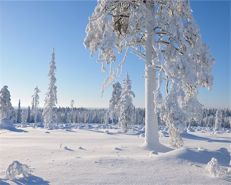 Kuusamo, Northern Ostrobothnia, Oulu Province, Finland Stock Photo - Premium Royalty-Free, Code: 600-05609995