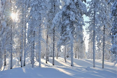 Kuusamo, Northern Ostrobothnia, Oulu Province, Finland Stock Photo - Premium Royalty-Free, Code: 600-05609999