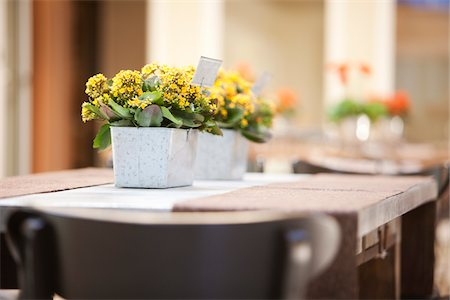 decorations - Kalanchoe on Table, Ontario, Canada Stock Photo - Premium Royalty-Free, Code: 600-05602733