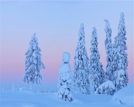 pretty - Snow Covered Spruce Trees at Dusk, Nissi, Northern Ostrobothnia, Finland Stock Photo - Premium Royalty-Free, Code: 600-05610005