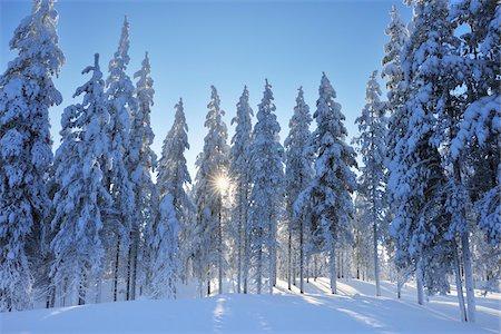 Kuusamo, Northern Ostrobothnia, Oulu Province, Finland Stock Photo - Premium Royalty-Free, Code: 600-05610001