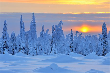 pretty - Snow Covered Trees at Sunset, Nissi, Northern Ostrobothnia, Finland Stock Photo - Premium Royalty-Free, Code: 600-05610016