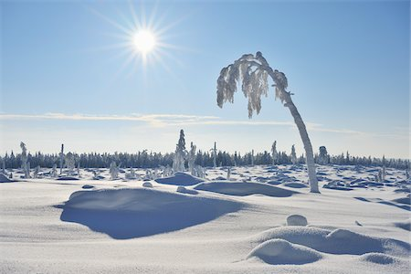 pretty - Snow Covered Tree with Sun, Nissi, Northern Ostrobothnia, Finland Stock Photo - Premium Royalty-Free, Code: 600-05610013