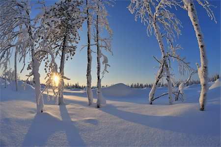 snow covered trees - Snow Covered Trees with Sun, Rukajarvi, Northern Ostrobothnia, Finland Stock Photo - Premium Royalty-Free, Code: 600-05610023