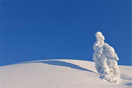 Snow Covered Tree, Rukatunturi, Kuusamo, Northern Ostrobothnia, Finland Stock Photo - Premium Royalty-Free, Code: 600-05610039