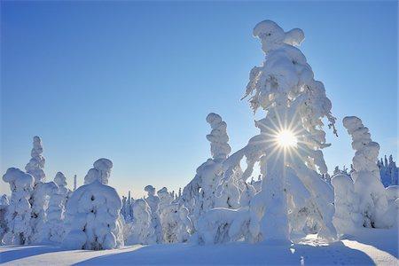 Sun through Snow Covered Trees, Rukatunturi, Kuusamo, Northern Ostrobothnia, Finland Stock Photo - Premium Royalty-Free, Code: 600-05610030