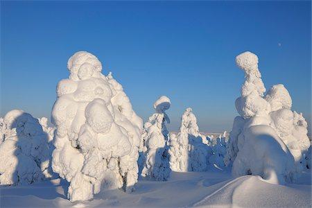 Snow Covered Trees, Rukatunturi, Kuusamo, Northern Ostrobothnia, Finland Stock Photo - Premium Royalty-Free, Code: 600-05610031