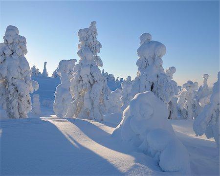 Snow Covered Trees, Rukatunturi, Kuusamo, Northern Ostrobothnia, Finland Stock Photo - Premium Royalty-Free, Code: 600-05610032