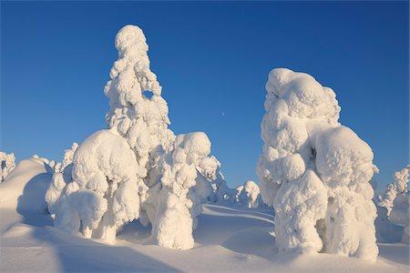Snow Covered Trees, Rukatunturi, Kuusamo, Northern Ostrobothnia, Finland Stock Photo - Premium Royalty-Free, Code: 600-05610033