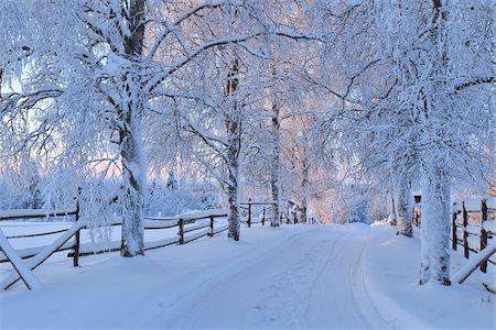 Snow Covered Road, Kuusamo, Northern Ostrobothnia, Finland Stock Photo - Premium Royalty-Free, Code: 600-05610044