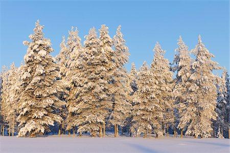 Snow Covered Trees, Kuusamo, Northern Ostrobothnia, Finland Stock Photo - Premium Royalty-Free, Code: 600-05610045