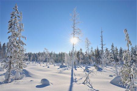 Sun through Snow Covered Trees, Kuusamo, Northern Ostrobothnia, Finland Stock Photo - Premium Royalty-Free, Code: 600-05610048