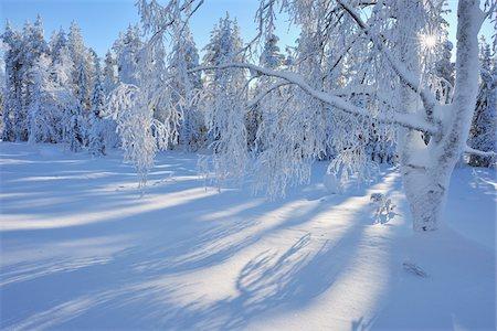 Snow Covered Trees, Kuusamo, Northern Ostrobothnia, Finland Stock Photo - Premium Royalty-Free, Code: 600-05610049