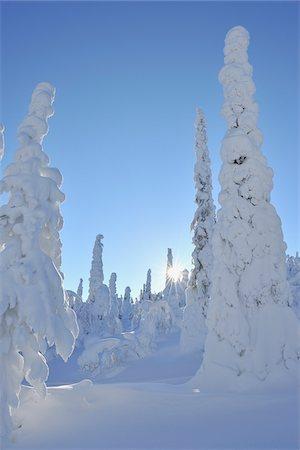 Sun through Snow Covered Trees, Rukatunturi, Kuusamo, Northern Ostrobothnia, Finland Stock Photo - Premium Royalty-Free, Code: 600-05610040