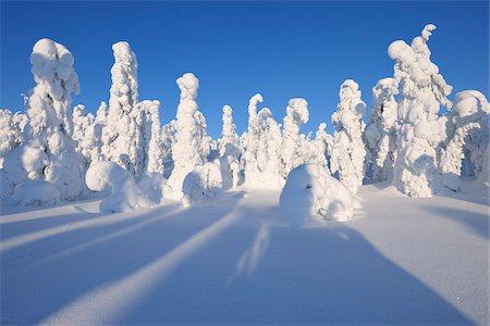 Snow Covered Trees, Rukatunturi, Kuusamo, Northern Ostrobothnia, Finland Stock Photo - Premium Royalty-Free, Code: 600-05610041