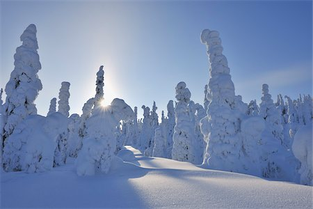 Sun through Snow Covered Trees, Rukatunturi, Kuusamo, Northern Ostrobothnia, Finland Stock Photo - Premium Royalty-Free, Code: 600-05610042