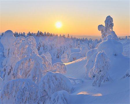 Snow Covered Trees at Sunset, Rukatunturi, Kuusamo, Northern Ostrobothnia, Finland Stock Photo - Premium Royalty-Free, Code: 600-05610054