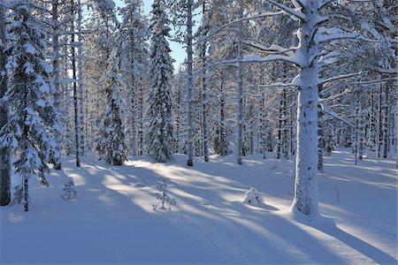 Snow Covered Trees, Kuusamo, Northern Ostrobothnia, Finland Stock Photo - Premium Royalty-Free, Code: 600-05610050
