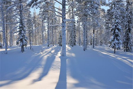 Snow Covered Trees, Kuusamo, Northern Ostrobothnia, Finland Stock Photo - Premium Royalty-Free, Code: 600-05610051