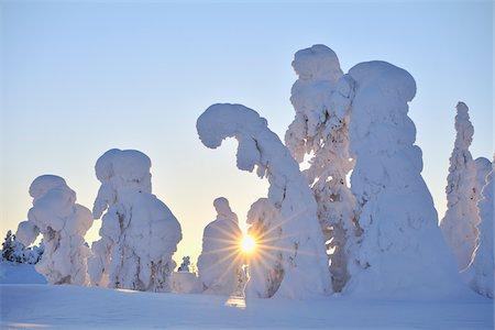 Snow Covered Trees at Sunset, Rukatunturi, Kuusamo, Northern Ostrobothnia, Finland Stock Photo - Premium Royalty-Free, Code: 600-05610052