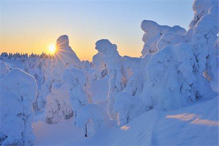 Snow Covered Trees at Sunset, Rukatunturi, Kuusamo, Northern Ostrobothnia, Finland Stock Photo - Premium Royalty-Free, Code: 600-05610053