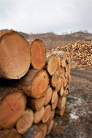 Piles of Logs, Scotland Stock Photo - Premium Royalty-Free, Code: 600-05641776
