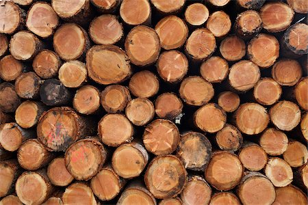forestry - Pile of Logs, Scotland Stock Photo - Premium Royalty-Free, Code: 600-05641777