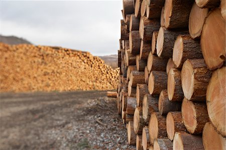 forestry - Piles of Logs, Scotland Stock Photo - Premium Royalty-Free, Code: 600-05641778