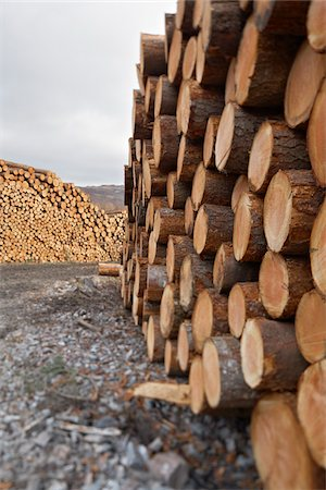 forestry - Piles of Logs, Scotland Stock Photo - Premium Royalty-Free, Code: 600-05641779