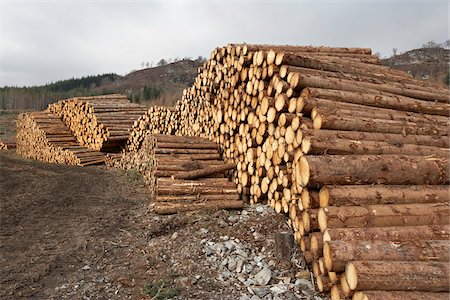 forestry - Piles of Logs, Scotland Stock Photo - Premium Royalty-Free, Code: 600-05641781