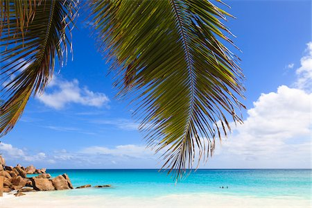 seychelles - Coconut Palm Tree Fronds and Indian Ocean at Anse Georgette, Praslin Island, Seychelles Stock Photo - Premium Royalty-Free, Code: 600-05786188