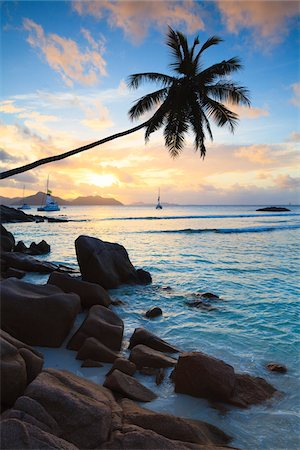 palm - Coconut Palm Tree at Sunset, Anse Severe, La Digue, Seychelles Stock Photo - Premium Royalty-Free, Code: 600-05786207