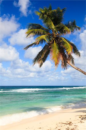 palm - Coconut Palm at Anse Parnel, Mahe, Seychelles Stock Photo - Premium Royalty-Free, Code: 600-05786219