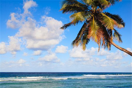 palm - Coconut Palm Tree on Beach, Baie Lazare, Mahe, Seychelles Stock Photo - Premium Royalty-Free, Code: 600-05786226