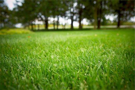 Lawn, Bradford, Ontario, Canada Stock Photo - Premium Royalty-Free, Code: 600-05786550