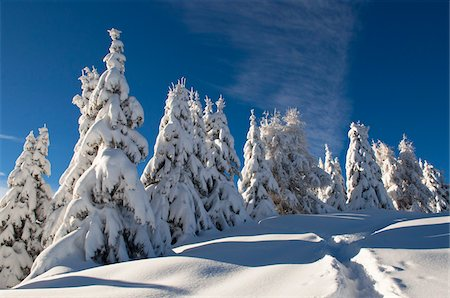snow covered trees - Alleghe, Belluno Province, Veneto, Dolomites, Italy Stock Photo - Premium Royalty-Free, Code: 600-05800576