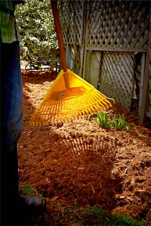 Gardener Raking fresh Cedar Mulch on Flower Bed, Toronto, Ontario, Canada Stock Photo - Premium Royalty-Free, Code: 600-05800614
