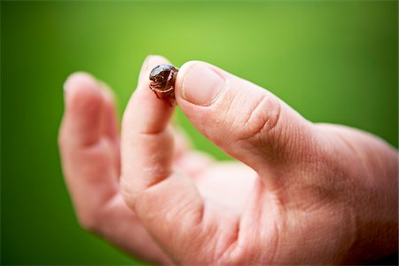 Close-up of Gardener's Hand holding Beetle Stock Photo - Premium Royalty-Free, Code: 600-05800629