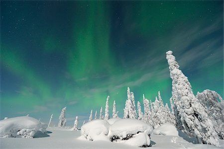 snow covered trees - Northern Lights, Nissi, Nordoesterbotten, Finland Stock Photo - Premium Royalty-Free, Code: 600-05803184