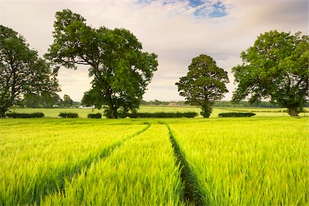 Wheat Field and Trees, Dumfries and Galloway, Scotland Stock Photo - Premium Royalty-Free, Code: 600-05803670
