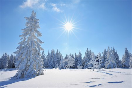snow covered trees - Snow Covered Conifer Trees with Sun, Grosser Beerberg, Suhl, Thuringia, Germany Stock Photo - Premium Royalty-Free, Code: 600-05803705
