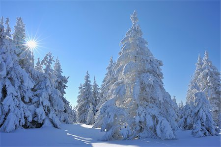 snow covered trees - Snow Covered Conifer Trees with Sun, Grosser Beerberg, Suhl, Thuringia, Germany Stock Photo - Premium Royalty-Free, Code: 600-05803702